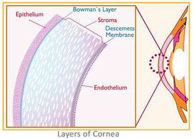 Cesbank First Corneal Endothelial Stem Cell Bank An
